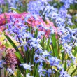 Springlike flower bed — Stock Photo