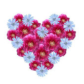 Floral heart, made of pink paeony and blue cornflowers — Stock Photo