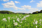 Picturesque bogland with wildflowers and cloudy sky, german landscape — Stock Photo