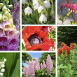 Collage of toxic plants in the garden — Stock Photo