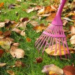 Stock Photo: Raking autumnal leaves at garden lawn