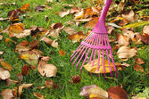 Raking autumnal leaves at garden lawn — Stock Photo