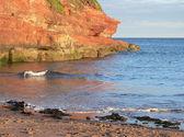 červený písek kámen a oceánu vlny, pobřežní krajina jižní anglie — Stock fotografie