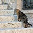 Straying cat on the staircase — Stock Photo