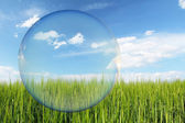 Think Green label, green wheat field and blue sky with clouds, design for ecology — Stock Photo