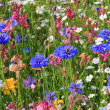 Beautiful wildflower meadow — Stock Photo #31305067