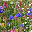 Stock Photo: Beautiful wildflower meadow