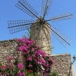 Stock Photo: Historical windmill with flourishing bougainvillea