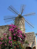 Historical windmill with flourishing bougainvillea — Stock Photo