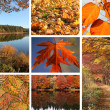 Collage of autumnal leaves and landscape — Stock Photo