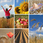 Happy harvest time, autumnal collage — Stock Photo