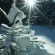 Snowy little fir with bright sunshine — Stock Photo