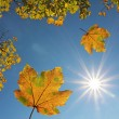 Falling maple leaves and blue sky with bright sun — Stock Photo #32028929