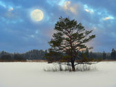 Mystic moonlight scenery in the moor — Stock Photo