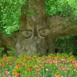 Stock Photo: Old tree with eyes, keeper of garden