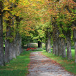 Autumnal chestnut alley in the park — Stock Photo