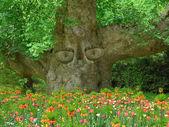 Oude boom met ogen, houder van de tuin — Stockfoto