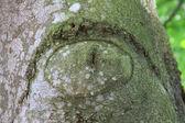 Eye in a tree bark — Stock Photo