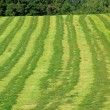 Mowed hay field — Stock Photo #33192309