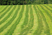 Mowed hay field — Stock Photo