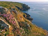 Idyllic coastline of mullion cove, with wildflowers, south west england — Stock Photo