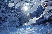 Wintry path in the woods with bright sunshine — Stock Photo