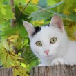 Playful cat in the maple tree — Stock Photo