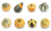 Collection of gourd pumpkins — Zdjęcie stockowe