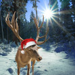 Deer with santa claus hat in the forest, christmas tale — Stock Photo
