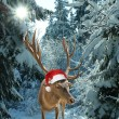 Reindeer with santclaus hat in forest — Stock Photo #35007711