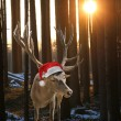 Reindeer with santa claus hat between fir trees — Stock Photo