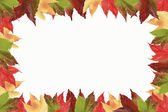 Frame of colorful isolated wild vine leaves — Stock Photo