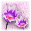 Two tulips on cherry blossom background — Stock Photo