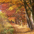 Pathway in autumnal beech tree forest — Stock Photo