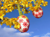Easter eggs, hanging on forsythia branch — Stock Photo