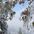 Winter wonderland, snowy forest glade — Stock Photo #38922177