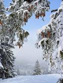 Winter wonderland, snowy forest glade — Stock Photo