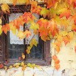 Lattice window framed with vine leaves, rustic country house — ストック写真