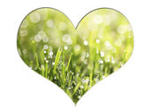 Green grass with dew drops in a heart shape, illustration for ec — Stock Photo