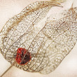 Dried filigree bladder cherry against light beige wall backgroun — Stock Photo #39225205