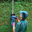 Gardener cutting thuja hedge with hedge clippers — Stock Photo #40014113