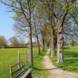 Bench and footpath through chestnut alley, springtime — Stock Photo