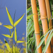 Collage of bamboo leaves and cane — Stock Photo #40164037