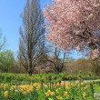 Scenic springtime landscape with flourishing cherry tree and nar — Stock Photo #40219751