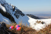 Easter nest with colored eggs in the alps — Stock Photo