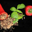 Red sweet peppers, filled with peppercorn mix, and basil leaves — Stock Photo