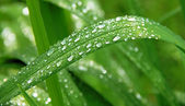 Green grass with morning dew — Stock Photo