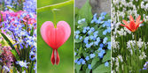 Collage - spring flowers, with bleeding heart, tulip and scilla — Stock Photo
