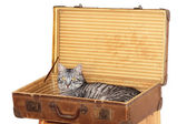 Travelling with pet - tomcat in a suitcase — Stock Photo