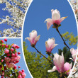 Collage - blossoming trees at springtime — Stock Photo